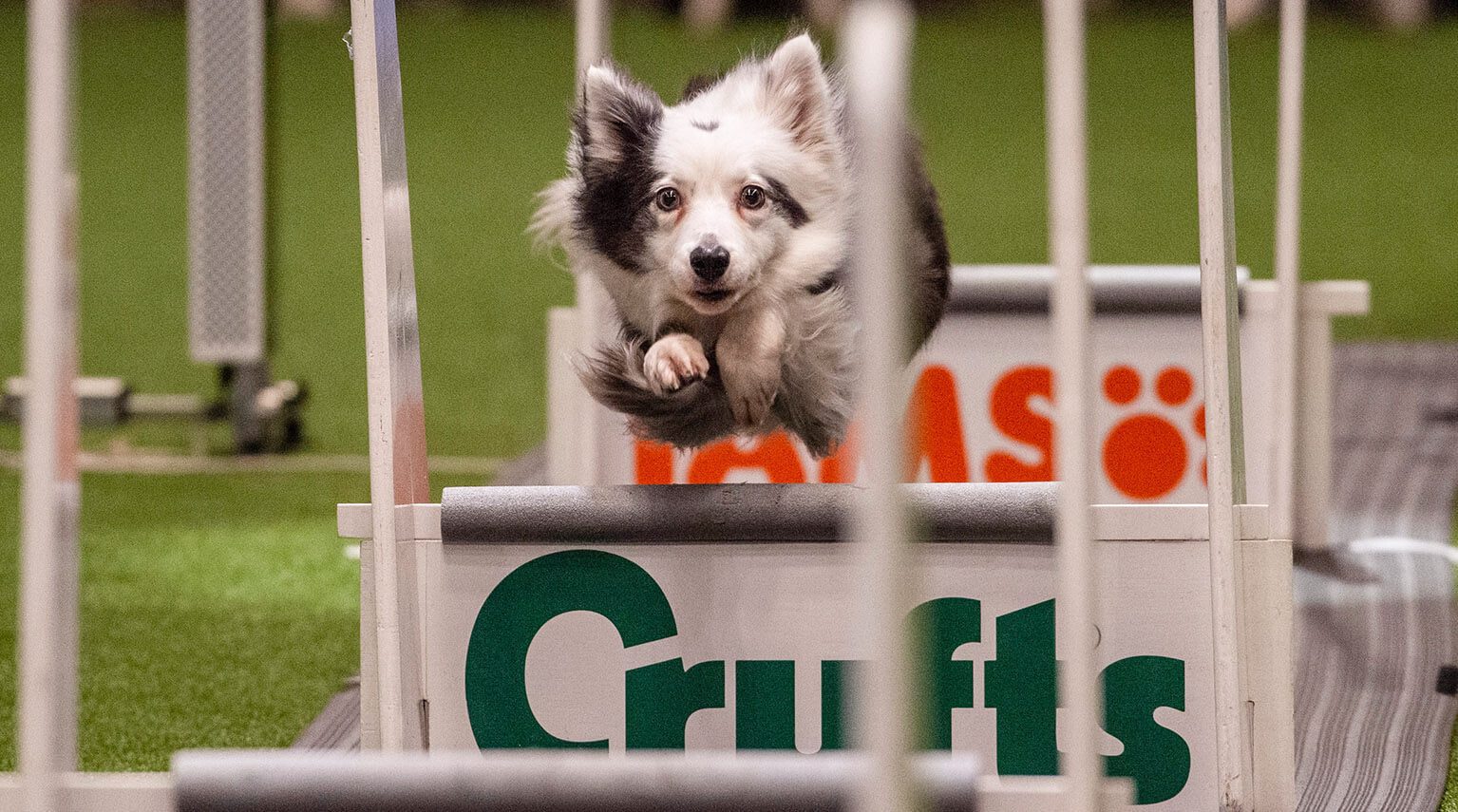 crufts-arenas-image2.jpg